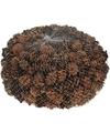 Decoratie dennenappeltjes bruin 300 gram 3 cm herfststukje-kerststukje maken