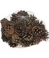 Decoratie dennenappeltjes bruin 300 gram 5 cm herfststukje-kerststukje maken